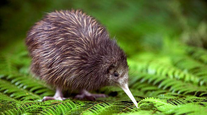 uccwllo.kiwi